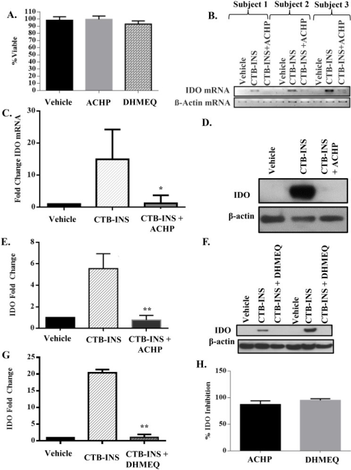 ACHP and DHMEQ inhibitors of NF-κB block CTB-INS induced IDO1 biosynthesis.(A) Dendritic cell viability was measured by determination of the percentage of DCs negative for annexin V and propidium iodide following treatment with ACHP (500 nM) and DHMEQ (3μg/ml). The measurement of DC viability shows vaccinated DCs are unaffected by treatment with the inhibitors. (B, C) Agarose gel electrophoresis and graphic representation showing changes in IDO1 mRNA levels in DCs from three representative subjects determined by qRT-PCR after 3 hours incubation of subject monocyte derived DCs with CTB-INS (10 μg/mL) or CTB-INS and ACHP. Statistical significance (p<0.05) was achieved by analysis of a total of 5 subjects. (The vehicle used is the DMSO solvent in which ACHP and DHMEQ are dissolved). (D, E) Immunoblot and graphic representation of the fold change in IDO protein synthesized 24hrs after vaccine inoculation of subjects DCs inoculated with CTB-INS +/- ACHP. The experimental data was collected from five normal subjects, although only one representative subject is shown. Statistical significance between vaccine treated and vaccine + ACHP treated groups was measured by paired Student's t test, (p = 0.0273). (F, G) Immunoblot and graphic representation of the fold change in IDO1 protein synthesized in subject DCs following inoculation with CTB-INS with and without DHMEQ. While experimental data was collected from five normal subjects, only two are shown to highlight the variability in IDO1 levels observed among subjects. Statistical significance was measured by paired Student's t test (p = 0.017). (H) Graphic representation showing the relative efficacy of ACHP and DHMEQ inhibitors for blocking NF-κB induction of IDO1 biosynthesis.