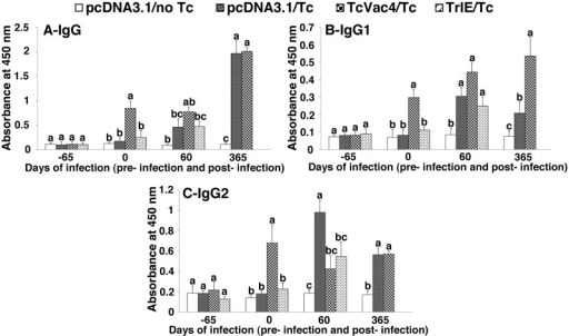 TcVac4-induced antibody response in dogs (± T. cruzi).Dogs were vaccinated with TcVac4 or TrIE only and infected with T. cruzi, as described in Materials and Methods. Shown are sera levels of T. cruzi-specific IgG (A), IgG1 (B), and IgG2 (C) antibody subtypes, determined by an ELISA. Dogs given pcDNA3.1/no infection and dogs given pcDNA3.1/T. cruzi were included as negative and positive controls, respectively. The serology time points are described as day -65 = basal response before immunization, day 0 representing antibody response after last immunization but before challenge infection, day 60 post challenge equivalent to acute infection phase, and day 365 post challenge equivalent to chronic disease phase. Each bar represents the absorbance mean value ± standard deviation. Within the same time point, statistical differences (p < 0.05) among groups are shown with different characters above the bars according to Tukey's test.