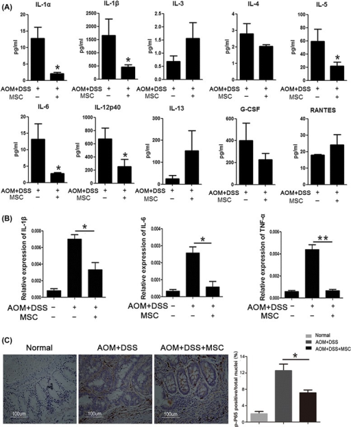 MSCs suppressed the expression of inflammatory cytokines. (A) Bio-Plex Assay was used to analyze cytokine changes in mice plasma, including IL-1α, IL-1β, IL-3, IL-4, IL-5, IL-6, IL-12, IL-13, G-CSF and RANTES. (B) The expression levels of colonic inflammatory cytokines (IL-1β, IL-6 and TNF-α) from different groups were evaluated by Q-PCR. (C) The expression of p-P65 examined by immunohistochemistry staining comparing the colons in the treated and untreated groups. Values are expressed as means ± SEM. *P <0.05, or **P <0.01. MSCs, mesenchymal stem cells; SEM, standard error of the mean.