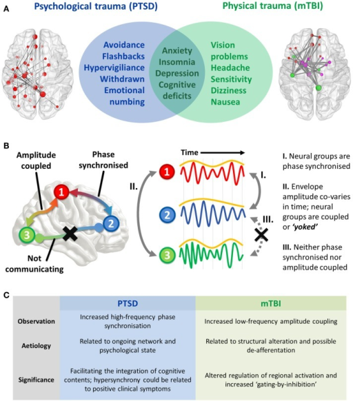 "(A) Interface of PTSD and mTBI symptomatology, and empirical evidence of altered spontaneous functional connectivity patterns in a resting-state paradigm. Both patient groups show elevated connectivity compared to their respective control groups, with increased coupling in PTSD mediated by high-frequency (high gamma-range, 80–150 Hz) oscillatory synchronization; in the mTBI group connectivity is enhanced in the low-frequency range (delta–theta range, 1–3 and 3–7 Hz), and is typified by envelope amplitude cross-correlations/temporal covariations. (B) Hypothesized role of coupled oscillators in interregional brain communication, and the distinct mechanisms of ""intrinsic coupling modes."" These are divided into phase ICMs (facilitating communication between regions 1 and 2, described in I), and envelope ICMs (regulating temporally coordinated activity between regions 2 and 3, described in II). In contrast to these mechanisms, regions 1 and 3 are neither phase synchronized nor amplitude coupled, and therefore communication is suppressed between these regions. (C) Summary of findings and the theorized phenomenological significance of these atypical connectivity patterns."