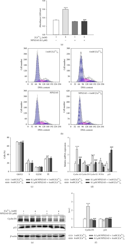 Inhibition of CaSR reversed the promotive effects of [Ca2+]o on the proliferation of pBMSCs. (a) Effects of NPS2143 (0.1 μM), an antagonist of CaSR, on the proliferation of pBMSCs after 5-day incubation (n = 8). (b) Effects of 4 mM [Ca2+]o and/or 0.1 μM NPS2143 on the cell cycle progression of pBMSCs. After pBMSCs were exposed to 4 mM [Ca2+]o with or without NPS2143 (0.1 μM) for 5 days, the cells were collected and treated according to the protocol in Materials and Methods. The DNA contents were measured with FACScan flow cytometry. (c) Analysis of proliferation index (PI) and the percentage of cells in G0/G1, S, and G2/M phases. (d) The mRNA expression levels of cyclins (cyclin A2, cyclin D3, and cyclin E2), PCNA, and p21 in response to 4 mM [Ca2+]o and/or 0.1 μM NPS2143. (e) Western blot analysis of cyclin D1 and p21 in pBMSCs after 5-day culture. β-actin was used as loading control. (f) Mean ± SEM of immunoblotting bands of cyclin D1 and p21; the intensities of the bands were expressed as the arbitrary units (n = 4). ∗P < 0.05, ∗∗P < 0.01, and ∗∗∗P < 0.001 versus 1 mM [Ca2+]o group (control); #P < 0.05, ##P < 0.01, and ###P < 0.001 versus 4 mM [Ca2+]o group.