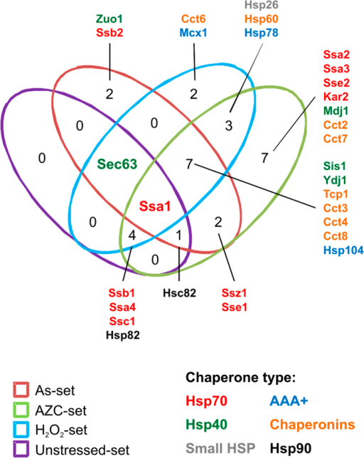 Molecular chaperones present in the aggregates.Molecular chaperones were identified within the datasets and the overlap between the datasets is presented. The chaperone types are indicated by colour of the text.