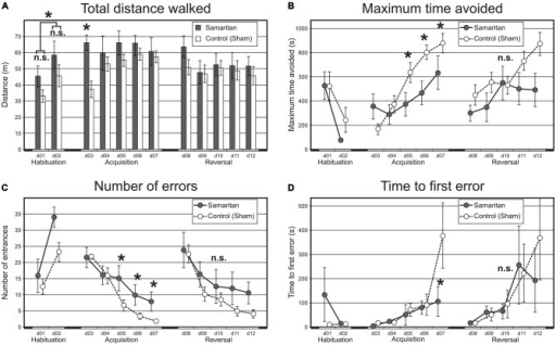 Results from the Carousel maze. The Carousel maze testing consisted of two habituation sessions (d01–02), acquisition (d03–07) and reversal training (d08–12). (A) Total distance walked is a measure of locomotor activity. In the habituation sessions, the difference between groups was not significant, but locomotion increased in the second session (with a rotating arena) relative to the first (with a stable arena). In the acquisition phase, the effect of group was also not significant; however, the control group gradually increased its locomotion, whereas the locomotion of the Samaritan rats was stable. In the reversal stage, no difference was found. (B) Maximum avoidance time indicates the longest period of successful avoidance during a session. Again, the effect of groups was not significant, but there was a significant interaction suggesting slower learning in the Samaritan group in the acquisition phase. In the reversal phase, neither the group effect nor interaction was significant, despite the apparent trend visible in the graph. (C) Number of errors (entrances into the sector) is another measure of avoidance behavior. The difference between groups was again not significant, but a significant interaction indicated slower learning and poorer final performance in Samaritans during the acquisition phase. In reversal, the apparent tendency toward increased number of errors in the Samaritan group remained non-significant. (D) Time to first error is a measure of between-session (long-term) memory. There was only a trend for group difference, but a significant interaction term again indicated poorer final performance in Samaritans during acquisition. There was no significant difference in the reversal phase, which may have been caused by the large variance in this parameter. Bars or data points in the charts show group means, and SEM is indicated by the error bars. Significant differences between groups at p < 0.05 as evaluated by the t-test on session-averaged data are indicated by an asterisk (*), n.s. indicates a non-significant result.