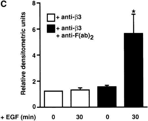 Effect of cross-linking β3 integrins on epidermal growth factor receptor clustering. (A) Representative immunofluorescence  micrographs for β3 integrins and EGF-Rs. Smooth muscle cells cultured on collagen substrates in SFM were preincubated for 60 min  with an anti–β3 integrin antibody (150 μg/ml) and then for 60 min with SFM alone or with an anti-F(ab′)2 IgG (20 μg/ml) to promote  cross-linking. Immunodetection of β3 integrins and EGF-Rs indicates that cross-linking β3 integrins promotes EGF-R clustering. (B) Effect  of cross-linking β3 integrins on ligand-dependent tyrosine phosphorylation of EGF-Rs. Tyrosine phosphorylation of EGF-Rs in response to EGF was examined in SMC cultures treated with anti–β3 integrin antibody alone or in cultures incubated sequentially with an  anti–β3 integrin antibody and anti-F(ab′)2 IgG. Epidermal growth factor receptor immunoprecipitates were analyzed by Western immunoblotting using an antiphosphotyrosine antibody, which indicated that cross-linking β3 integrins potentiates ligand-dependent EGF-R  activation. (C) Densitometry of activated epidermal growth factor Western immunoblots (as shown in B) shows that a significant (*P <  0.05) increase in ligand-dependent tyrosine phosphorylation occurs after β3 integrin cross-linking. Values represent mean ±SEM from  three different experiments. Bar, 25 μm.