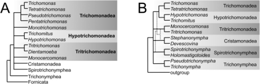 Cartoon of parabasalid evolutionary relationships summarized from published phylogenies.The consensus backbone phylogenies shown are derived from (A) 18S rDNA [10], [37], and (B) concatenated 18S rDNA genes and enolase, GAPDH, α- and β-tubulin proteins [11]. Dotted lines indicate prior results without 18S rDNA [7].