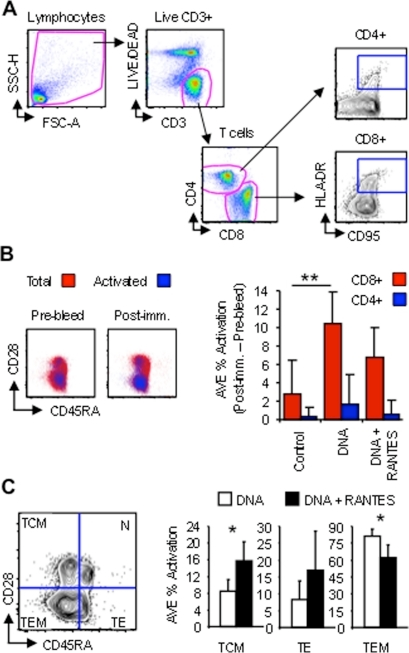 RANTES increases central memory CD8+ T formation during DNA vaccination.PBMCs isolated before the first immunization (Pre-bleed) and 2 weeks following the fourth (Post-imm.) were stained without ex vivo stimulation and analyzed by flow cytometry. (A) Strategy showing gating of total lymphocytes, live CD3+ cells, CD4+ and CD8+ T-cells, and activated cells (HLA-DR+CD95+). (B) Vaccine-induced activation from before (Pre-bleed) and after immunization (Post-imm.) are shown as dot plots with total CD8+ cells (red) overlayed by activated ones (blue) as a function of CD28 and CD45RA. The average percentage of activation per group of animals (Post-imm. – Pre-bleed) is displayed to the right for total CD8+ (red bars) and CD4+ (blue bars) T-cells. (C) Activated memory T-cell subsets were determined by gating as a function of CD28 and CD45RA, which differentiate naïve (N; CD28+CD45RA+), effectors/terminally differentiated effectors (TE; CD28−CD45RA+), central memory (TEM; CD28+CD45RA−) and effector memory (TEM; CD28−CD45RA−). The average percentage of activated cells for each phenotype is enumerated on right for DNA (white bars) versus DNA+RANTES (black bars) vaccinated animals. Graphs are pseudo-color and contour plots with outliers shown and data are from a representative animal. Error bars represent SD; *P<0.05, and **P<0.005 per the unpaired t test.