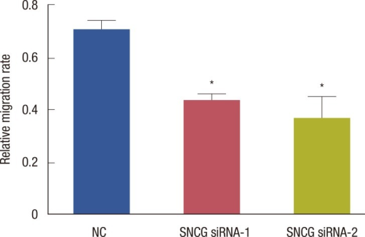 The relative migration rate of each group. The relative migration rate of Synuclein-γ (SNCG) siRNA-1 and SNCG siRNA-2 groups decreased significantly (p<0.05, respectively).NC=negative control.*p<0.05 vs. NC group.