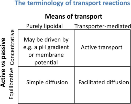 Transport reactions may be discriminated both by whether they are equilibrative or concentrative in nature (a thermodynamic property) and whether they involve solely any phospholipid bilayer that may be present or instead rely on specific transporters (a mechanistic assessment). It is important not to confuse the two.