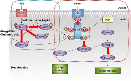 Effect of four different chemicals on inflammation-associated insulin signaling pathway in HepG2 cells. The QDot HCS assay was developed for various key kinases involved in inflammation-associated IR that are indicated with a red arrow and validated by specific inhibitors and anti-inflammatory drugs as shown. The p38α, JNK1, and IKKβ involved in the inflammatory pathway and IRS1ser307, IRS1tyr, FOXO1, and GSK3β associated with the insulin signaling pathway were simultaneously monitored by QDot multicolor cellular imaging.