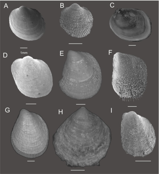 Philobryid shell morphology.Specimens labeled A-I refer to (A) Adacnarca nitens, (B) A. limopsoides (C) Lissarca miliaris (D) L. notorcadensis (E) Philobrya capillata (F) P. crispa (G) P. magellanica, (H) P. sublaevis and (I) P. wandelensis.
