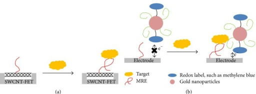 Illustration of examples of signal enhancement methods in ssDNA MRE based electrochemical biosensors. (a) A representation of a single-walled carbon nanotubes field effect transistors. (b) A representation of gold nanoparticles carrying redox labels in a sandwich detection style.