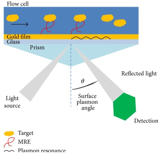 Illustration of ssDNA MRE based surface plasmon resonance biosensors. When targets bind to immobilized MREs, a change in the plasmon resonance and plasmon angle will be detected and translated into a real-time response unit.
