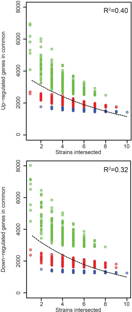 Rice gene expression changes induced in common by the Xoc strains. The number of genes up- or down- regulated in rice (cv. Nipponbare, at 48 h after syringe infiltration) in common by each of n strains across all possible groups of strains is plotted as a function of n. The least-square fit of an exponential decay function is shown as a dashed line, with R2 values for the fit displayed in the upper-right of each graph. CFBP2286 and BXOR1 induced the fewest gene expression changes (up or down), and this is reflected in stratification of the points in each plot. To make this apparent, groups containing only one of these strains are shown in red and groups containing both in blue.