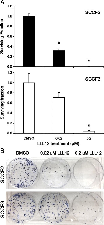 Impact of LLL12 on colony formation in feline OSCC cell lines. a Feline OSCC cells were seeded at 1,000 cells per well in 6 –well plates for 24 h, followed by treatment with DMSO, 0.02, 0.2 or 2 μM LLL12 until formation of visible colonies. Cells were then fixed and stained with crystal violet and colonies greater than 50 cells were counted. After counting colonies, plating efficiency and survival fraction were calculated. Plating efficiency was defined as the number of colonies formed divided by the number of cells seeded in DMSO treated groups. Survival fraction was defined as the number of colonies formed divided by the number of cells seeded in LLL12 treated groups, normalized to the plating efficiency (*p < 0.0001). b Photographs of representative 6-well plates