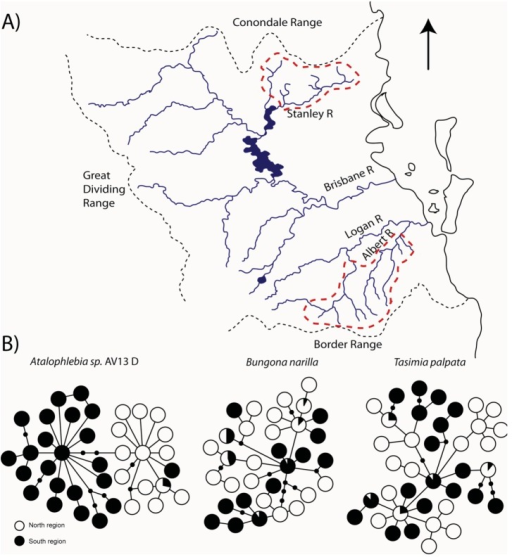 (A) Map of Conondale (north) and Lamington (south) regions; (B) Cytochrome Oxidase 1 haplotype networks for three species sampled in both north and south regions [29-31]; (C) We used a hierarchical Approximate Bayesian Computation method, analyzed with MTML-msbayes [38], to estimate the number of divergence events (Ψ) that can explain the shared pylogeographic break in these three co-distributed taxa. Within the msbayes pipeline, we simulated 1,000,000 datasets (parameterized by random draws from predefined ranges) and calculated 23 different summary statistics from each dataset to create a prior distribution. The same summary statistics were calculated for our observed datasets (based on the CO1 region of the mtDNA molecule) and compared to the simulated summary statistics to generate posterior distributions for the variance of τ (time since divergence), average τ and Ψ. The posterior distributions shown here for E(τ) and Ψ were estimated using the local regression method. For the histogram describing Ψ, the red bars show the posterior distribution while the black bars show the prior distribution. For a more detailed explanation of msbayes see [12,38,39].