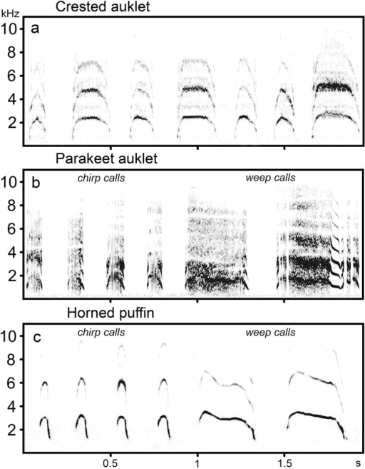 Spectrograms of calls in the vocal repertoires of auk chicks.(A) calls of crested auklet chicks, (B) chirp and weep calls of parakeet auklet chicks and (C) chirp and weep calls of horned puffin chicks. Spectrograms were created with a 1024-point FFT, Hamming window, frame 25% and 98.43% overlap.