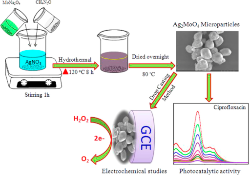 The synthesis route for Ag2MoO4 microparticles and its application for photocatalytic activity and electrochemical biosensor.