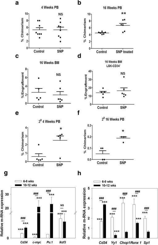 NO-induced CD34 expression has contrasting age-dependent effects on the HSC functionality. Lin− cells isolated from juvenile mice (6–8 weeks; CD45.1) were treated or not with 200 μM sodium nitroprusside (SNP) for 3 days and infused into irradiated recipients (8–10 weeks; CD45.2); 7–8 mice were used per group. The level of engraftment was analyzed by flow cytometry analysis of peripheral blood (PB) and bone marrow (BM). Percentage chimerism by the donor cells in PB of recipients at 4 weeks (a) and 16 weeks (b) post-transplant is depicted. Percentage engraftment of total donor cells (c) and LSK CD34− LT-HSCs (d) in the BM of recipients is illustrated. The engrafted donor cells were sorted from the bone marrow of primary recipients and infused into irradiated secondary recipients. The percentage chimerism by these primary engrafted donor cells was analyzed by flow cytometry in the PB of secondary recipients. Percentage chimerism produced by the primary engrafted cells in the PB of secondary recipients at 4 weeks (e) and 16 weeks (f) post-transplant is shown; 4–5 secondary recipients were used per group. Sort-purified LSK-CD34− cells from juvenile (6–8 weeks) and adult (10–12 weeks) mice were treated with 200 μM SNP for 3 days (g) or 12 h (h), and the cells were subjected to qRT-PCR analyses. Relative expression of Cd34 and various transcription factors is illustrated (means ± SEM; N = 3). *p ≤ 0.05, **p ≤ 0.01, ***p ≤ 0.001, between control and SNP-treated sets; ###p ≤ 0.001, SNP-treated juvenile versus SNP-treated adult HSCs. Also see Additional file 6 (Figure S4). NS not significant