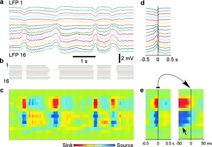 Alternating pattern of current sinks and sources during natural slow-wave  sleep revealed with CSD