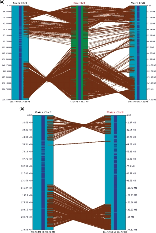 SyMAP chromosome 2D view. (a) Three chromosomes in 2D. (b) Two chromosomes in 2D. These two displays show the effect of transitive homology, where there is more homology via rice-1 than directly between maize-3 and maize-8. Each brown line represents an anchor. The size of the displayed region is shown at the lower end of the chromosome.