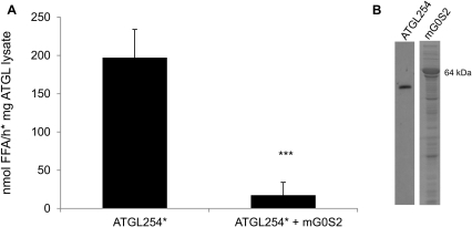 Minimal active fragment of ATGL can be inhibited by G0S2.A. ATGL254 was expressed in E. coli, lysates prepared, and TG hydrolase activity assay performed in the presence of purified CGI-58 (*), without and with addition of mG0S2 as described in Figure 2. Data are presented as mean+SD and representative for three independent experiments, each performed in triplicates. *** indicate statistical significant differences as determined by unpaired Student's t-test (two-tailed), p>0.001. B. Western Blotting analysis of ATGL254 expression and SDS-PAGE gel confirming expression of mG0S2 in bacterial lysate.