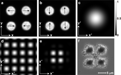Fabrication of multi-microholes by the fs PVOFs composed of four individual linearly-polarized scalar fields with m = 0 and a = 1.0 mm.(a) and (b) are the two PVOFs composed of four individual linearly-polarized scalar fields, which arrange a square, where the arrows show the SoP configurations. (c) shows the simulated Airy spot of the focused individual field. (d) is the simulated interference pattern with a tetragonal lattice of four individual fields. (e) indicates the simulated pattern of the focused PVOF, which contains four bright spots. (c)–(e) have a dimension of 60 × 60 μm2. (f) is the SEM image of the multi-microholes fabricated by 50 pulses at a fluence of about 6.9 J/cm2.