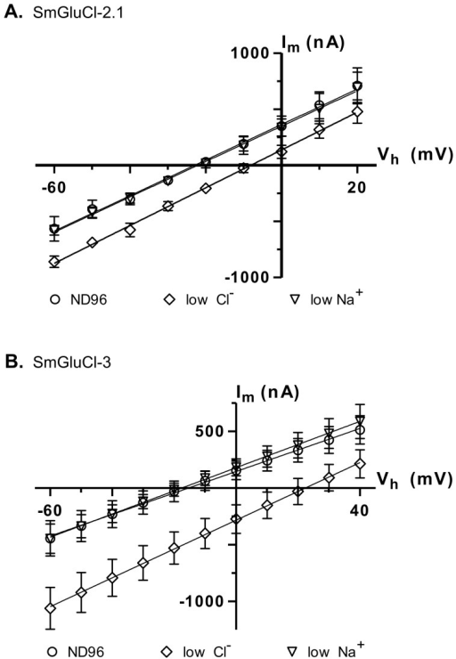 Ion selectivity of SmGluCl-2.1 and SmGluCl-3.Glutamate-sensitive current-voltage relationship experiments were performed in Xenopus oocytes injected with SmGluCl-2.1 or SmGluCl-3 cRNA. The M2 domain of all 4 members of the SmGluCl clade contains the molecular determinants for chloride selectivity, as shown in Figure S1[23], [24]. A. Current-voltage curves obtained from oocytes injected with SmGluCl-2.1 cRNA. A positive shift in the reversal potential is observed when the extracellular chloride concentration was altered (P<0.0001, one-way ANOVA), consistent with a chloride-selective SmGluCl-2.1 receptor. Extracellular chloride was 103.6 mM for normal ND96 and 45.6 mM for reduced chloride ND96. Extracellular sodium was 96 mM for normal ND96 and 38 mM for reduced sodium ND96. B. Current-voltage curves obtained from oocytes injected with SmGluCl-3 cRNA. A positive shift in the reversal potential was observed when the extracellular chloride concentration is altered (P<0.0001, one-way ANOVA), indicating that the SmGluCl-3 receptor exhibits chloride selectivity. Extracellular chloride was 103.6 mM for normal ND96 and 13.6 mM for reduced chloride ND96. Extracellular sodium was 96 mM for normal ND96 and 6 mM for reduced sodium ND96. Chloride or sodium were replaced with sodium gluconate or choline chloride, respectively. n = 4 (where n is the number of individual oocytes) for each data point. Error bars represent SD.