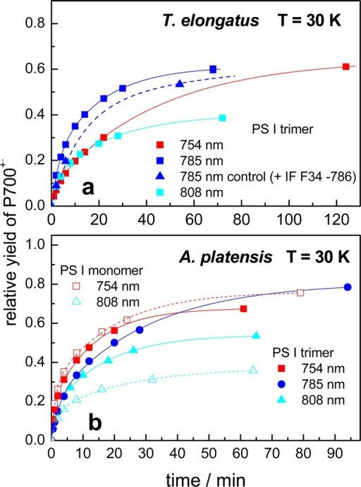 Yields of P700+• photoaccumulationupon selective far-red excitation in PS I trimers from T. elongatus (a) and PS I monomers and trimers from A. platensis (b) detected by EPR at 30 K dividedby the maximum yield obtained with white light illumination as a functionof the duration of excitation. The solid lines are the result of abiexponential fit. In a control experiment (785 nm control), an interferencefilter (F34-786 from AHF Analysentechnik) was placed directly in frontof the resonator.