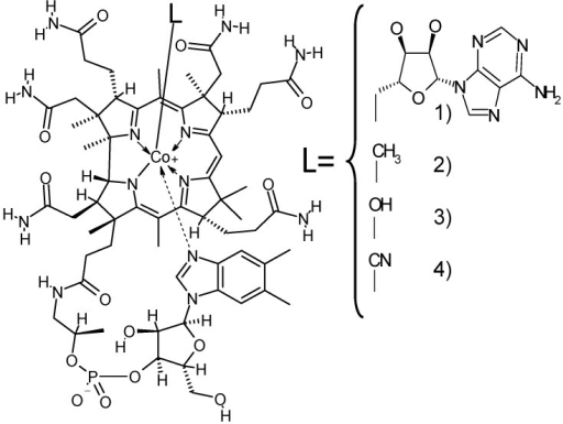 Structural formula of Vitamin B12 and partial structures of Vitamin B12 compounds. The partial structures of the Vitamin B12 compounds only show the regions of the molecule that differ from Vitamin B12. (1) 5′-Deoxyadenosylcobalamin; (2) methylcobalamin; (3) hydroxocobalamin; and (4) cyanocobalamin or Vitamin B12.