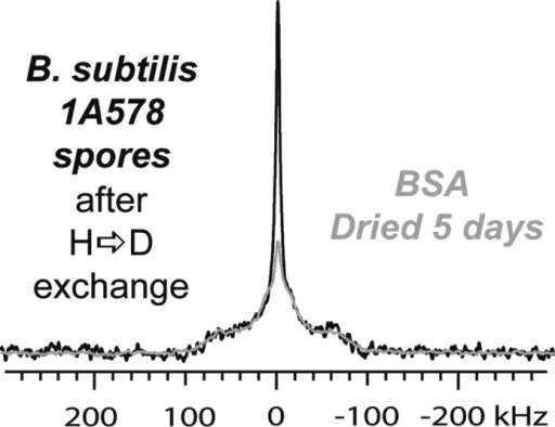 Postexchange B. subtilis 1A578 spore spectrum(Figure 4) overlaid on the same spectrum asthe five-day lyophilized deuterated BSA (Figure 5B). BSA's spectrum fits well to the broad peak feature in1A578 but less so to the mobile water peak feature. The differencein line shape between this and Figure 10 isattributed to structural changes in B. subtilis 1A578resulting in higher protein conformational homogeneity and may beresponsible for the differences in line shape overall between B. subtilis 1A578 and B. subtilis ATCC6051.