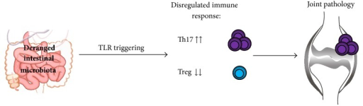 Exposure to deranged intestinal microbiota or a disregulated immune response to microbiota drives rheumatoid arthritis by promoting Th17 and deranging Treg cells.