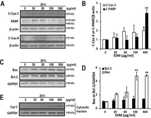 ESM induces apoptosis signaling pathway in K562 cells. ESM-treated cells were analyzed by immunoblotting with antibodies against cleaved PARP (C-PARP, 89 kDa), full length PARP (116 kDa), cleaved caspase-3 (C-Cas-3) and cleaved caspase-9 (C-Cas-9). (A) Levels of Bax and Bcl-2 expression were then determined by immunoblotting analysis (C); The bar chart shows densitometric analysis of the indicated bands in A and C, respectively (B,D); Cytochrome C (Cyt C) in the cytosolic fractions was detected by immunoblotting (E). β-Actin and GAPDH were used as the internal controls. Data are presented as the mean ± SEM (n = 3). ** P <0.01 and * P < 0.05 compared with control.