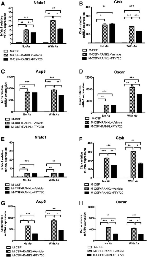 FTY720 significantly decreased Nfatc1, Ctsk, Acp5, and Oscar expressions in bone marrow-derived pre-osteoclasts with or without A. actinomycetemcomitans (Aa) stimulation. Bone marrow-derived pre-osteoclasts were treated as described in Methods. Cells were treated with vehicle (ethanol) or FTY720 (2 μM) for 30 min. Then the cells were either unstimulated or stimulated with A. actinomycetemcomitans (Aa) (0.5 CFU/cell) in the presence of vehicle or FTY720 for 4 h (a-d) or for 24 h (e-h). a, e Nfatc1 mRNA, (b, f) Ctsk mRNA, (c, g) Acp5 mRNA, and (d, h) Oscar mRNA levels were normalized by an endogenous control GAPDH expression and expressed as fold change compared with control group. Data are expressed as mean ± SEM (n = 3, *p < 0.05, **p < 0.01, ***p < 0.001)