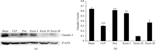Effects of escin after oral administration on the expression of intestinal tight junction protein claudin-5. A value of P < 0.05 was accepted as indicating a statistically significant difference among groups. △△P < 0.01, compared with the sham group; ∗∗P < 0.01, compared with the CLP group.