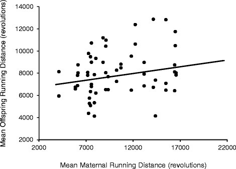 Relationship between mean offspring (G2) running distance (revolutions/day) and mean maternal (G1) running distance. G2 values represent the means of days 5 and 6 of a 6-day wheel exposure at ~9 weeks of age. G1 values are the averages of days 33 and 34 of wheel access. The G1 running trait values are approximately age matched to the values of the offspring. Pearson partial correlations (r; controlling for sex) revealed a statically significant relationship between the two running variables (p = 0.031, r = 0.282)