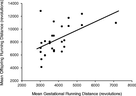 Relationship between mean offspring (G2) running distance (revolutions/day) and mean gestational (G1) running distance. G2 values represent the means of days 5 and 6 of a 6-day wheel exposure at ~9 weeks of age. G1 running trait values are the means of days 48–54 of wheel access. Days 48–54 occurred after a confirmed pregnancy (presence of vaginal plugs) and removal of the male, but prior to giving birth. Pearson partial correlations (r; controlling for sex) revealed a statically significant relationship between the two running variables (p = 0.001, r = 0.600)