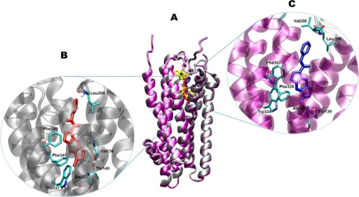 Structural determinants of the SB-206553 binding site at the 5-HT2Rs.(A) Ribbon diagram of the superimposed structures of the 5-HT2BR (silver) and 5-HT2CR (purple), showing the putative binding site for SB-206553 (red or blue, respectively) at each protein. For comparative purposes, the binding site for ergotamine (yellow) in the crystal structure of the 5-HT2BR (PDB code 4IB4) is also depicted. (B-C) Close ups of the docking poses of SB-206553 at 5-HT2BR and 5-HT2CR, respectively. Main active site amino acid residues (cyan) are rendered as stick models.