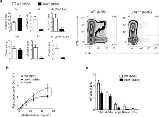 IL-33 signaling is required for neonatal RSV immunopathophysiology.(a) Number of Th1, Th2, and multifunctional mTh cells in the lungs of wild-type (WT) or ST2-deficient (Il1rl1-/-) mice at 6 dpi following reinfection with RSV (methods) (n = 5–6 per group). (b) Change in airway resistance in response to increasing doses of inhaled methacholine after treatment as in a (n = 6 per group), compared to naïve control mice of similar size and age. (c) Total cells (Total), monocytes/macrophages (Mo/MΦ), lymphocytes (Lymph), neutrophils (Neutro), and eosinophils (Eos) in BAL fluid after treatment as in a (n = 5–8 per group). *P < 0.05 (Student's t-test (a, c) or two-way ANOVA with Bonferroni post-hoc tests (b)). Data are representative of two independent experiments (means ± s.e.m).