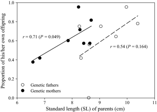 Larger parents of Perissodus microlepis tend to have higher proportions of their own young than smaller parents, although this trend is statistically significant only for mothers (r = 0.71, n = 8, P = 0.049). Unfilled circles: genetic fathers; filled circles: genetic mothers.