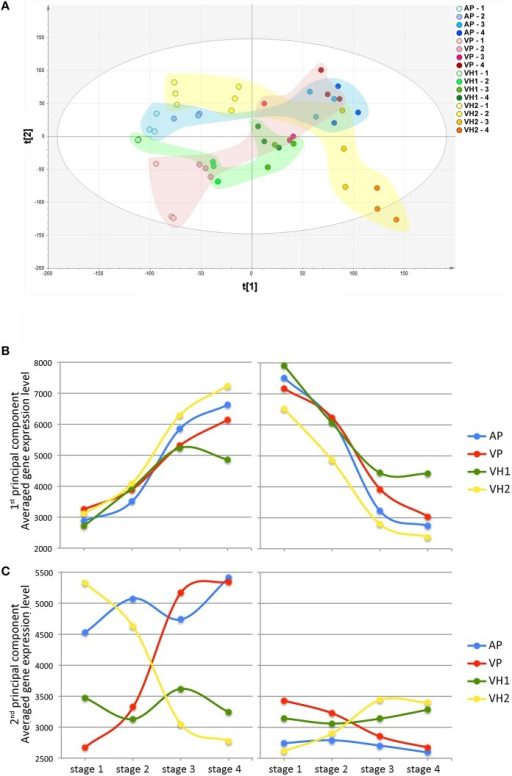 Global gene expression trends in Garganega berries cultivated at four locations during ripening. (A) Variables and scores scatterplot of the PCA model (R2X = 0.748, Q2cum = 0.582) applied to the entire dataset. The expression profiles of genes positively (left) and negatively (right) correlated to the first (B) and second (C) principal components were selected within the first (positive) and the last (negative) percentile of each of the component loadings.