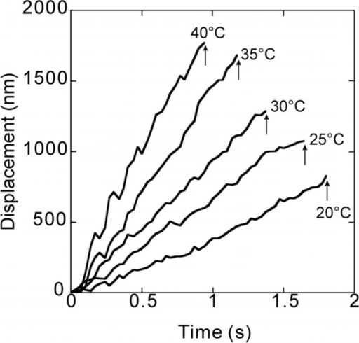 Typical traces showing the time course of bead movement along a microtubule at various temperatures (Supplementary Movies 1–5. Note that those movies do not necessarily correspond to the data shown here). These traces were taken between 1 and 6 min of the incubation at each temperature. Attachment of the bead to a micro-tubule occurred at the zero point. Arrows indicate the time at which the kinesin-bound bead detached from the microtubule, detected by the disappearance of the fluorescent image of the bead. Run length was defined as the ordinate of the detachment point. Duration is the period of time between attachment and detachment of the bead. Walking velocity was estimated from the average slope of the time course of the bead movement obtained by the least squares method.