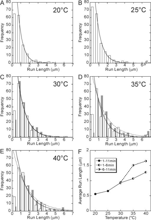 Temperature dependence of run length. The data at 20°C (A) and 25°C (B) were obtained between 1 and 11 min after the incubation at each temperature. On the other hand, for 30°C (C), 35°C (D) and 40°C (E), the data obtained between 1 and 6 min of incubation are shown by open bars, whereas those obtained between 6 and 11 min of incubation are shown by gray bars, because they showed a different set of values although the shape of the distribution was the same, i.e., approximated by a single exponential. Distribution of run lengths was fitted by an exponential function (a solid or a dashed curve). Here, the run lengths shorter than 0.5 μm were excluded from the analysis. The average run length, which was defined as the characteristic run length of the exponential function, obtained from each distribution shown here, was 0.56, 0.66, 0.93 (0.94), 1.07 (1.51) and 1.28 (1.65) μm at 20, 25, 30, 35 and 40°C, respectively (the values in the parentheses, the data for 6–11 min). In Fig. 2F, these values are shown by closed circles for 20 and 25°C and left-half filled circles for 30, 35 and 40°C connected by a solid line. Right-half filled circles (connected by a dashed line) show the average run length obtained from the data taken between 6 and 11 min of incubation at 30, 35 and 40°C.