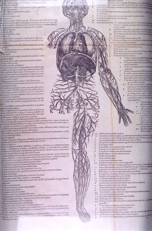 <p>Incomplete view of another &quot;arterial man.&quot;</p>