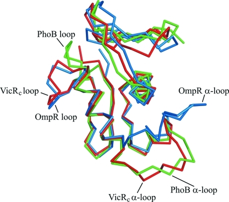 Structural comparison of the Cα backbones of VicRc (red), PhoB (green) and OmpR (blue). The α-loops and the loops linking α3 to the C-terminal β-hairpin are labelled.