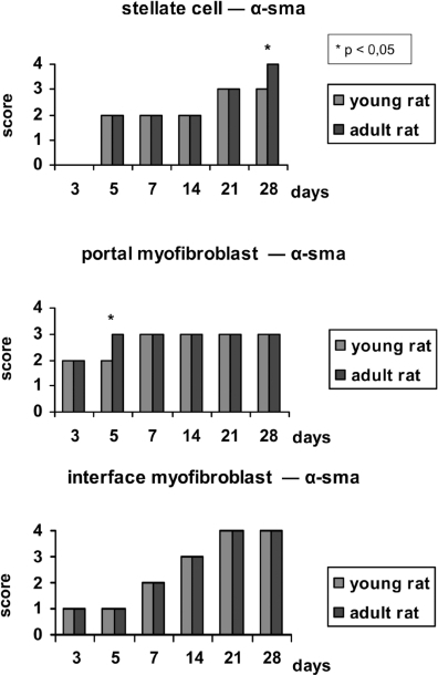 Bar chart showing the expression of α-SMA at each phase of the experiment in young rats (YR) and adult rats (AR). The values expressed are medians