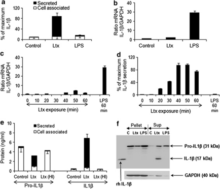 Effects of A. actinomycetemcomitans leukotoxin (Ltx) on human macrophage IL-1β production and secretion. (a) ELISA quantification of the cell-associated and secreted IL-1β from macrophages exposed to 10 ng/ml A. actinomycetemcomitans Ltx or 100 ng/ml E. coli LPS (LPS) for 180 min. Mean values±S.D. of seven experiments with macrophages obtained from different donors. (b) Real-time RT-PCR quantification of mRNA of IL-1β in macrophages exposed to Ltx (10 ng/ml) or LPS (100 ng/ml) for 60 min in relation to the endogenous control GAPDH. Mean values±S.D. of three experiments from one macrophage donor. (c) Levels of mRNA for IL-1β in relation to the endogenous control GAPDH quantified by real time RT-PCR in macrophages exposed to Ltx (0–60 min) or LPS (60 min). Mean values±S.D. from three experiments from one macrophage donor. (d) ELISA quantification of IL-1β secreted from macrophages exposed to Ltx (0–60 min) or LPS (60 min). Mean values±S.D. from three experiments from one macrophage donor. (e) ELISA quantification of the cell-associated and secreted amounts of pro-IL-1β and IL-1β of macrophages exposed for 60 min to 10 ng/ml Ltx or 10 ng/ml heat-inactivated (HI) Ltx (pretreated at 70 °C for 30 min). Mean values±S.D. from three experiments from one macrophage donor. (f) Western blot analyses of cell lysates (Pellet) and supernatants (Sup) of macrophages exposed to 10 ng/ml Ltx or 100 ng/ml LPS for 60 min. GAPDH was used as endogenous control. Recombinant human IL-1β (rh IL1β, left lower band) was used for verification of the position of the 17 kDa IL-1β (active form). Representative results from two experiments with different macrophage donors are shown