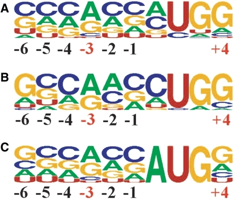 Weblogo representation of the region surrounding the known and putative conserved non-AUG initiation sites in humans. Numbering is relative to the first nucleotide of the start codon. (A) Representation for the 42 sequences with newly identified extensions. (B) Representation for the 17 sequences with previously identified and conserved extensions. (C) Representation of all AUG start sites of humans [the frequencies for nucleotide occurrence at each position for the human mRNAs were obtained from the Transterm database (73)].