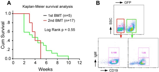B-cell leukemia/lymphoma induced by BCR-FGFR1 is transplantable.A) Kaplan-Meier survival analysis of the second generation of BCR-FGFR1 mice, which were transplanted with BM cells (0.6–1.5×106 cell per mouse) from lethally irradiated primary recipients. B) Representative flow analysis shows that lymphoma/tumor cells from a second serial transplanted mouse are differentially blocked at the pro-B stage.