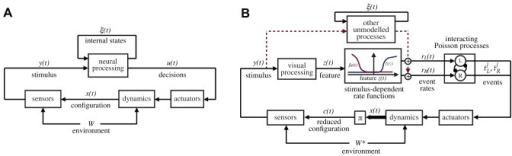 General reference models for the animal behavior and decision making.Panel A illustrates the nomenclature that we use in this paper:  is the animal configuration (position/velocity), which ultimately depends on the past history of the animal decisions, the body dynamics, and environmental effects, here abstractly represented by the variable . The stimulus  perceived by the animal is a function of the animal configuration  and the geometry/textures of the environment. In the most general terms, the actions of the animals, , are generated on the basis of the instantaneous stimulus  as well as the internal state , which includes, for our purposes, everything which is not observable, including metabolic and neural states. Panel B illustrates the specialization of the model that we postulate. The decisions of the animals are represented by series of observable events belonging to a fixed set of classes; in our case these are left and right body saccades. The events are assumed to be generated by a set of interacting rate-variant Poisson processes. The instantaneous rates  depend on several factors, including the unobservable states, and the external stimulus. The main hypothesis of this paper is that the contribution of the stimulus on the rate can be written as a function of a low-dimensional feature  computed from the stimulus. The inference problem in this paper consists in identifying the functions  that best explain the rates as a function of the stimulus (). The diagram also shows the impact of other unmodeled neural processing based on internal states, acting as a disturbance in the model. We do not infer a functional description of this modeling, but we are able to bound its contribution and show that it is small with respect to the stimulus-induced contribution. The diagram also shows the reduced configuration, the subset of  on which the stimulus actually depends. The reduced configuration depends on the particular experimental settings; in our case, we postulate that in a circular arena the stimulus is dependent on only two degrees of freedom. This is a hypothesis that can be verified a posteriori.