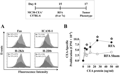 Tumor phenotype and CEA-specific immune responses after ultra low-dose RFA.Female C57BL/6 mice (n = 7/group) were injected s.c. on day 0 with MC38-CEA+ tumor cells. On day 15, tumors were exposed to RFA sham (0 s) or ultra low-dose RFA (7 s, 60–70°C). A, on day 17, the cell-surface phenotype of pooled excised tumor cells was analyzed by flow cytometry. Histograms depict fluorescence intensity of CEA+ tumor cells expressing Fas, ICAM-1, and MHC class I H-2Kb and H-2Db before (dark histograms) and after (light histograms) RFA. Inset numbers represent % positive cells and MFI (parentheses) for each marker. B, on day 29, purified CD4+ splenic T cells from animals exposed to sham or low-dose RFA were tested by in vitro lymphoproliferation assay for reactivity to CEA protein (0–50 ug/mL). Results are depicted as mean CEA-specific CD4+ proliferation ± S.E.M. after subtraction of background CD4+ reactivity to control beta-galactosidase protein. Asterisks denote statistical significance between treatment groups (P<0.05, 2-tailed t test). Effect of RFA on tumor phenotype data was performed twice yielding similar results.